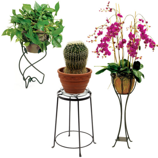 Single Plant Stands